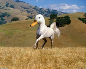 cheval-carnard