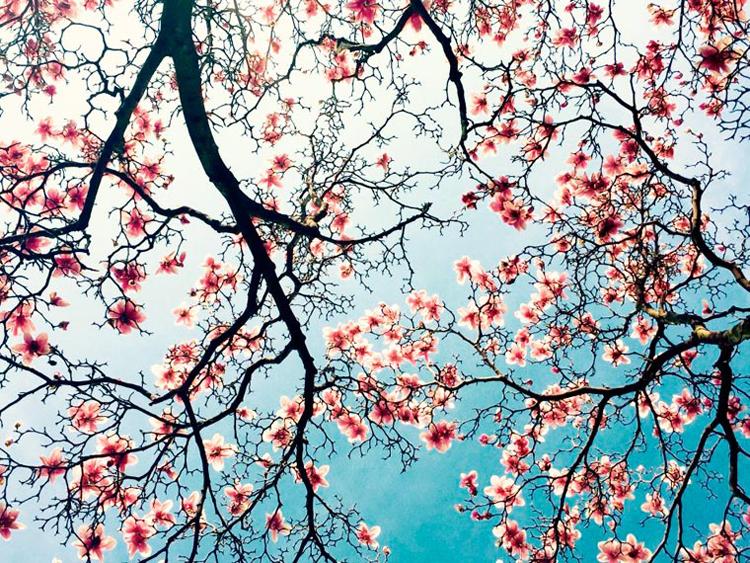 """Le 3e prix dans la catégorie """"Fleurs"""" (© Qinglan Qu)"""