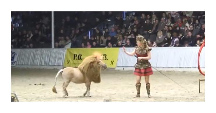 cheval-lion