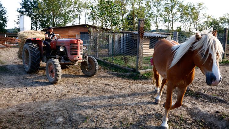 C'est l'heure du repas ! À l'aide d'un tracteur, Aude apporte une botte de foin aux chevaux. Dans la nature, ils mangent entre 15 à 16 heures par jour. Aude respecte leur rythme naturel et fait en sorte qu'ils aient toujours quelque chose à manger. (© Vincent Gire/Milan presse)
