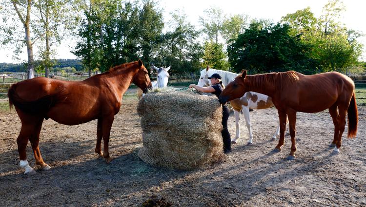 """Pour que les chevaux ne fassent pas """"qu'une bouchée"""" de cette botte de foin de 270 kilos, Aude la recouvre d'un filet à foin. Ainsi les chevaux ne peuvent arracher que de petites quantité de foin… Les gourmands ! (© Vincent Gire/Milan presse)"""