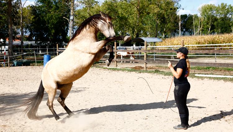 éducation cheval éthologie